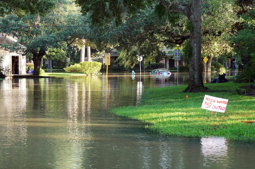 flooding on street lined with trees