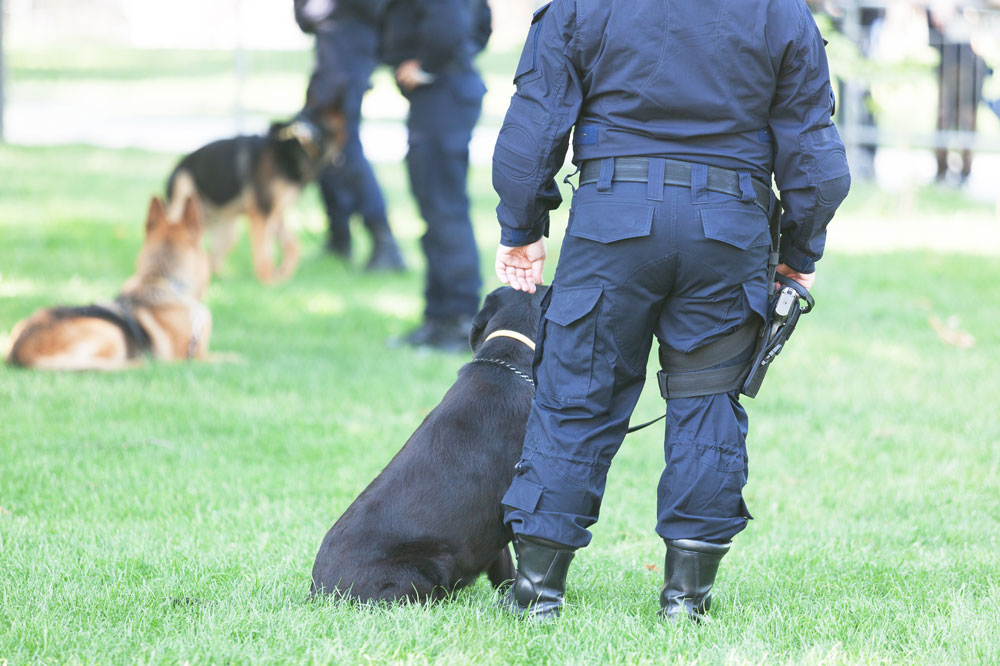 Police officer standing with police dog in training